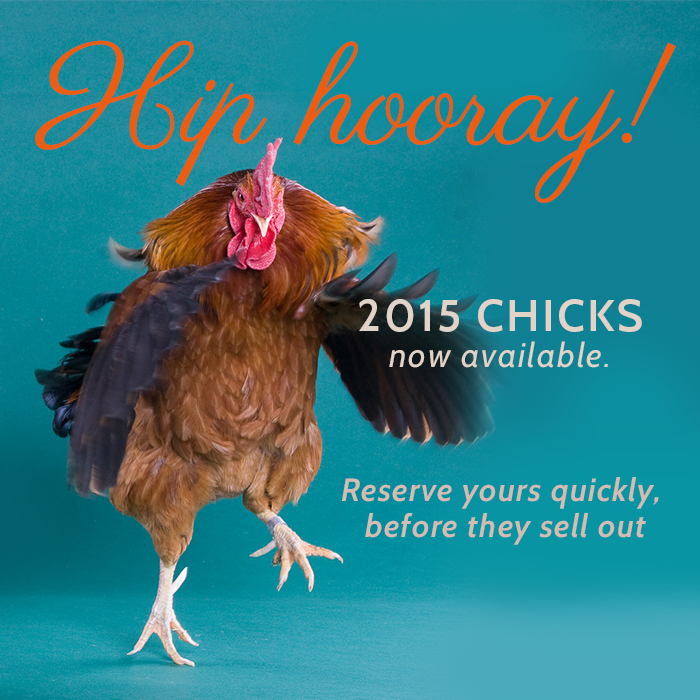 2015Chicks_Facebook_Rooster_DayCome_Hooray